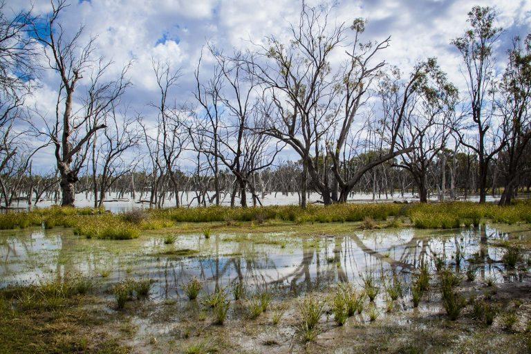 Reach Lara Wetlands
